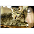 Kitties_011_web