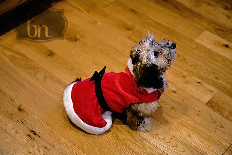 Christmas 08 1 011 web