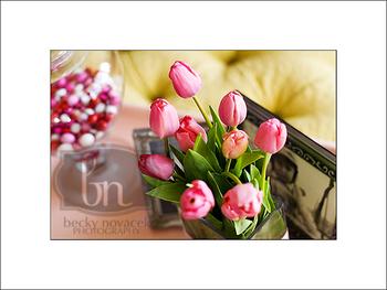 Tulips_002_web