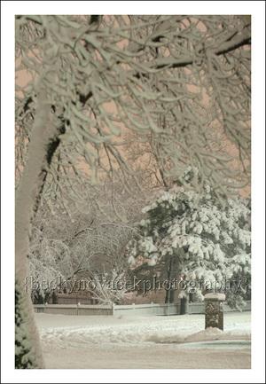 Snow_feb_24_001_web