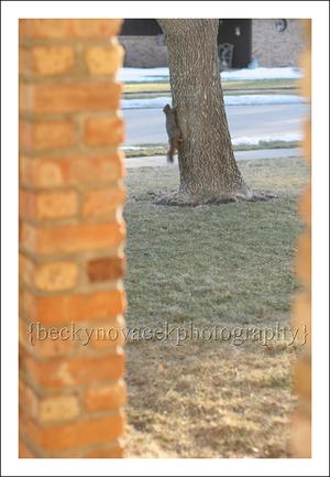 Squirrel_006_web
